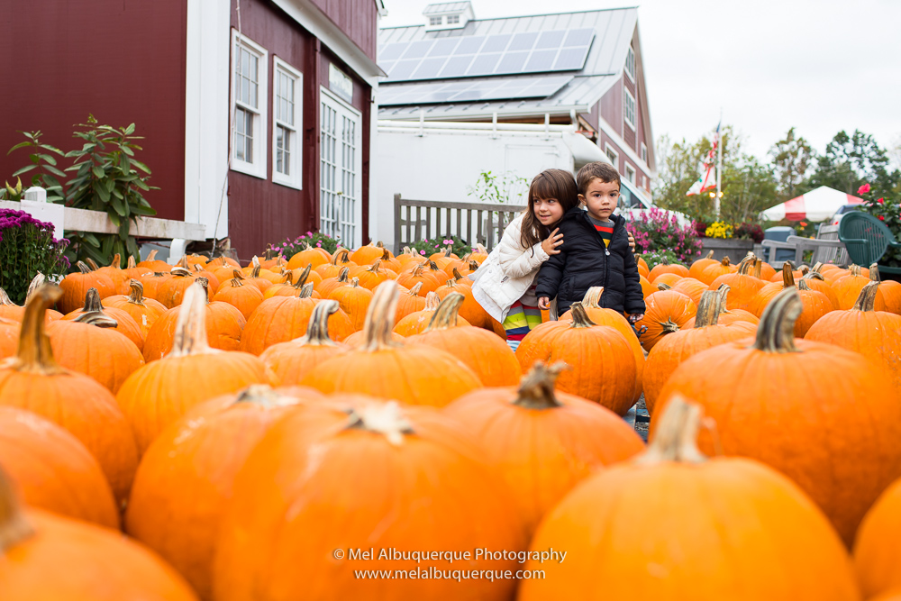 pumpkin patch em new jersey