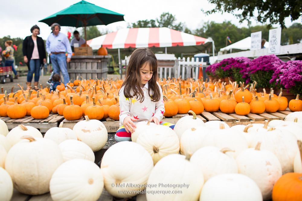abóboras brancas para o halloween