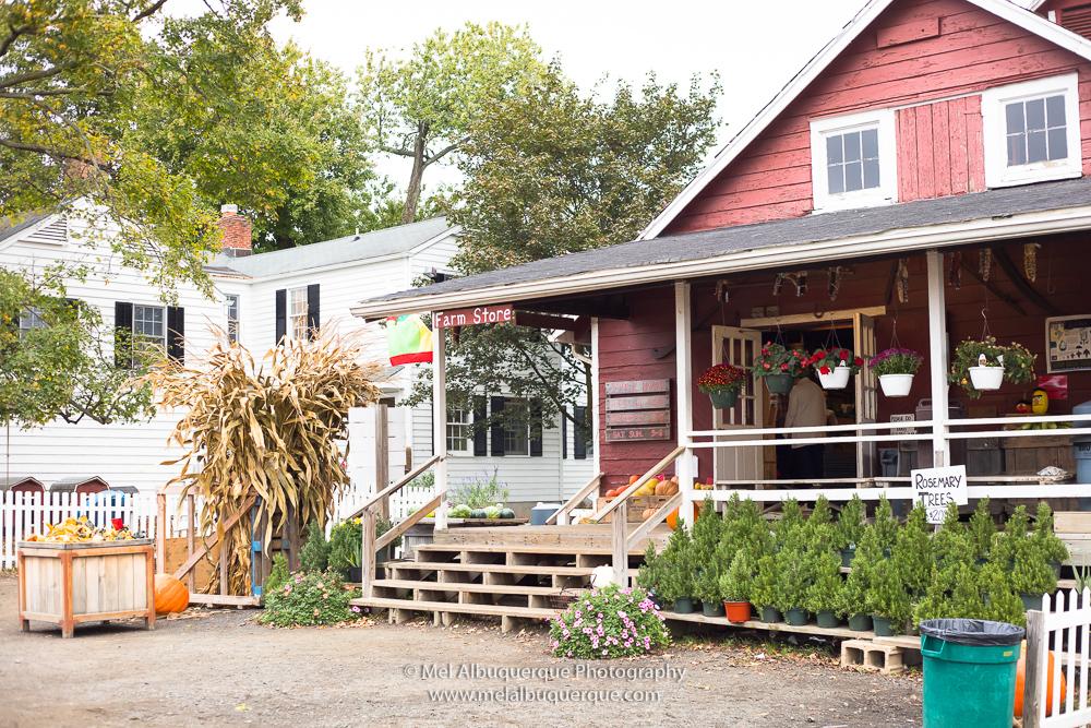 a farm store lojinha da fazenda Terhune Orchads